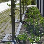 awardwinning_landscaping-_hermanus_100