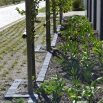 awardwinning_landscaping-_hermanus_100