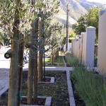 landscaping_south_africa_chb_0013