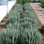 landscaping_south_africa_chb_003