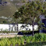 soft_landscaping-_fernkloof_fynbos