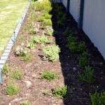 soft_landscaping-_fernkloof_village_002